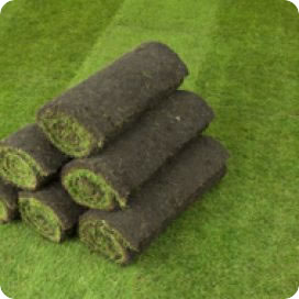 Brighten Up Your Garden With The Countryu0027s Most Popular Turf. Q Lawn Turf  Is Good Looking, Hardwearing And Suitable For Almost Any Application As The  ...